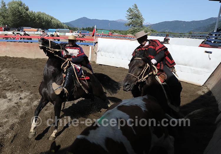Les huasos, les hommes emblématiques de la Patagonie chilienne