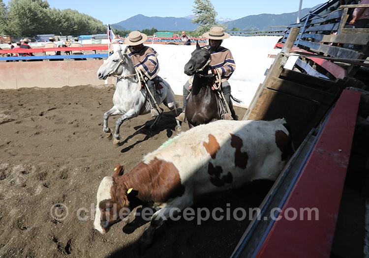 Les huasos et leurs chevaux