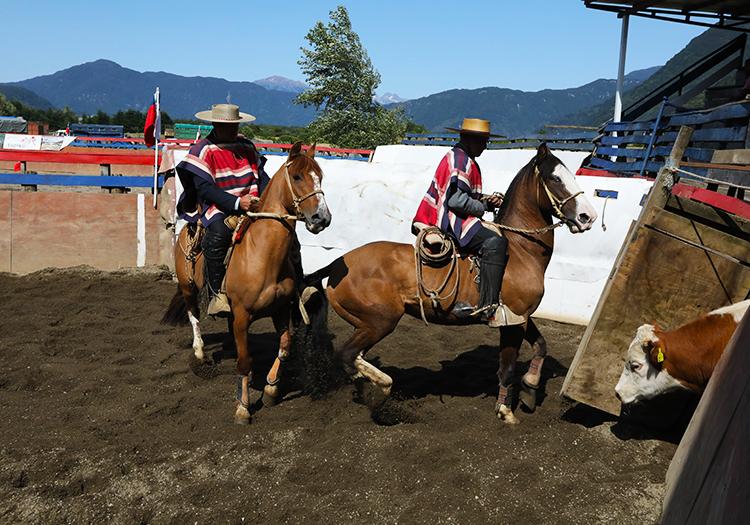 Rodeo des éleveurs