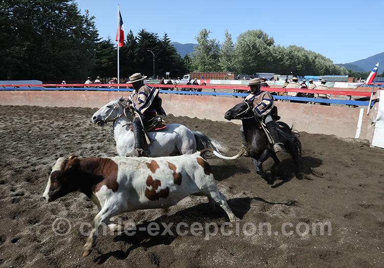 Compétition de huasos au Chili