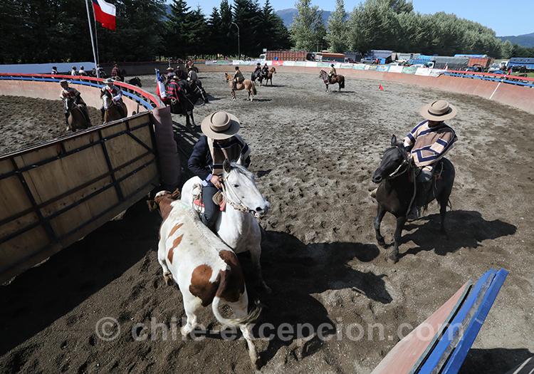 Concours de rodéo et de dressage au Chili