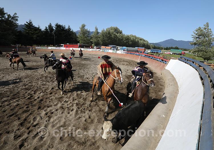 La culture de l'élevage au Chili