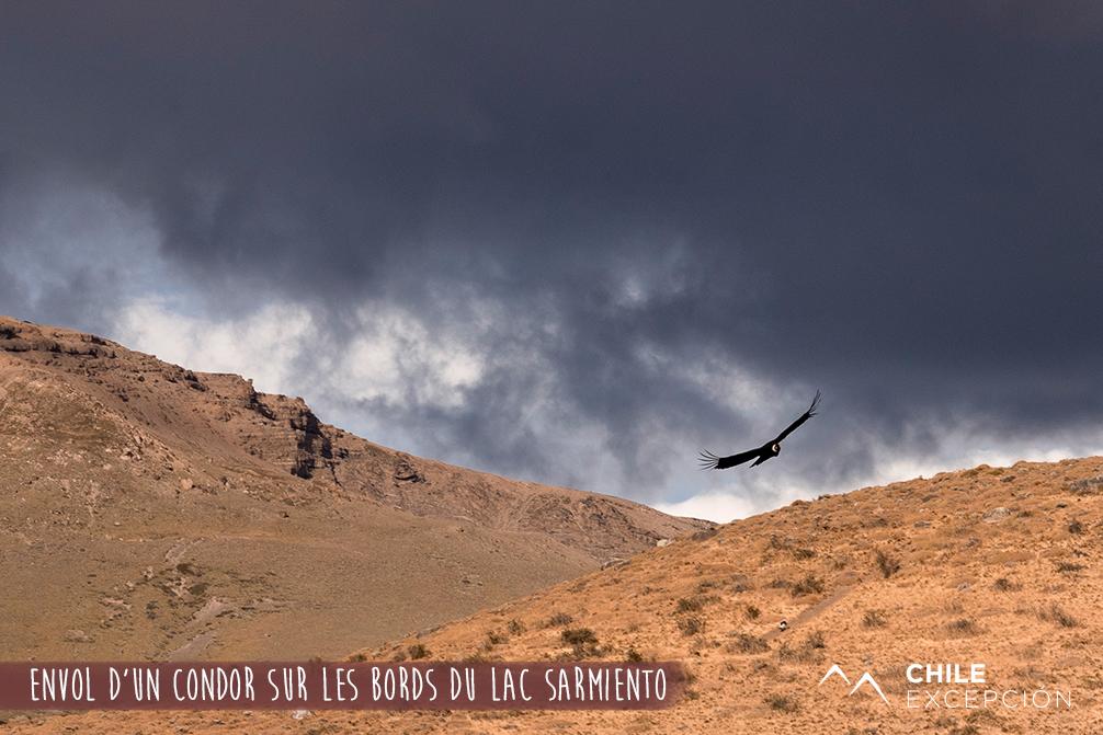 Envol d'un condor sur les bords du lac Sarmiento