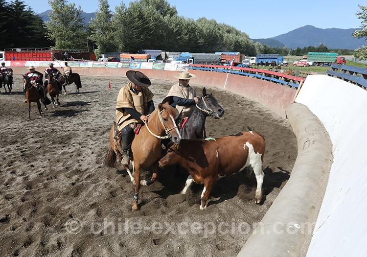 Voir une représentation de huasos au Chili