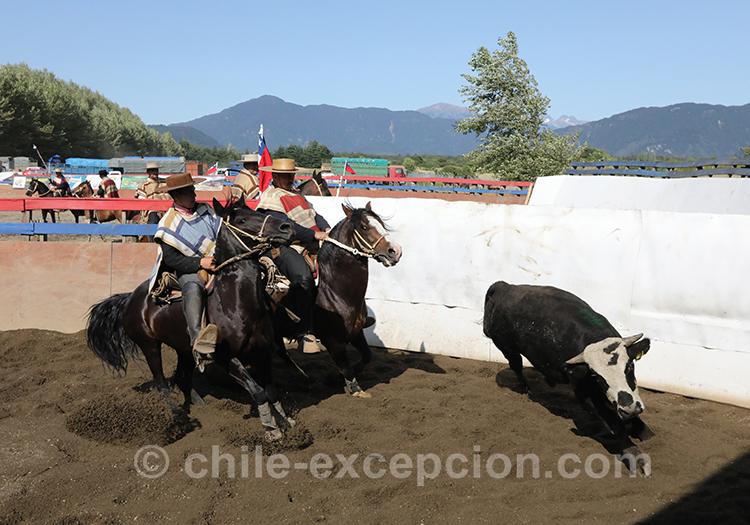 Se rendre à du rodéo chilien