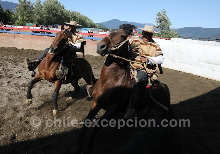 Cavaliers et dressage, Chili