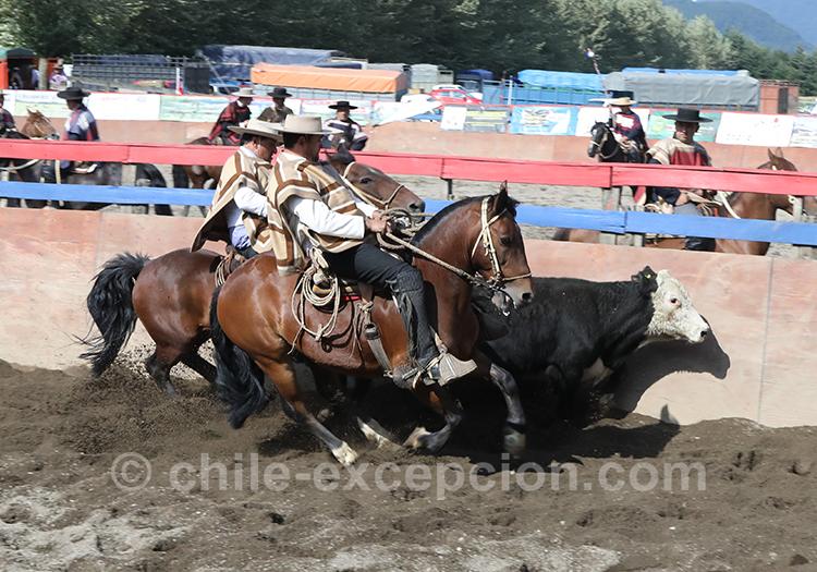 Cavaliers lors d'un rodéo, Chili