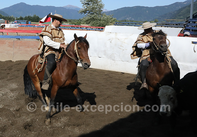 Cavaliers lors d'un dressage au Chili