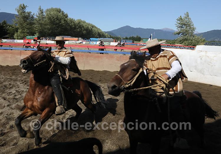 Cavaliers faisant un rodéo, Chili