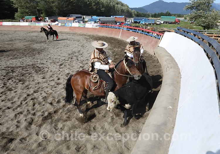 L'équitation au Chili