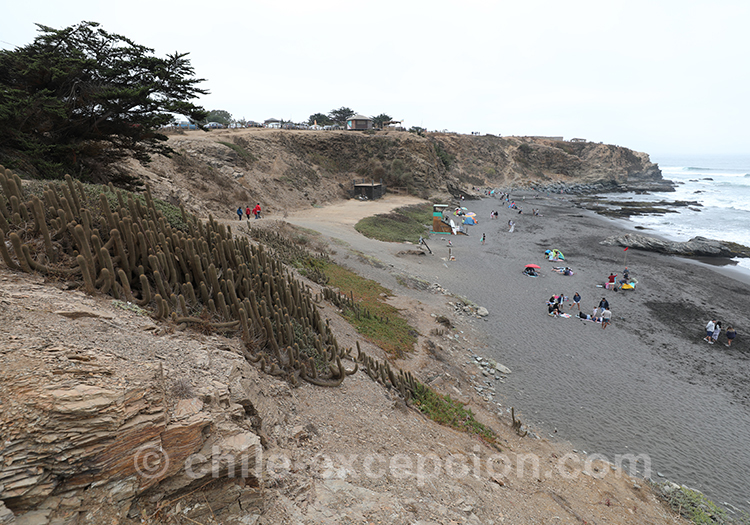La plage de Punta de Lobos, Chili