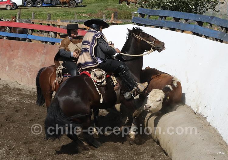 Les chevaux et les huasos au Chili