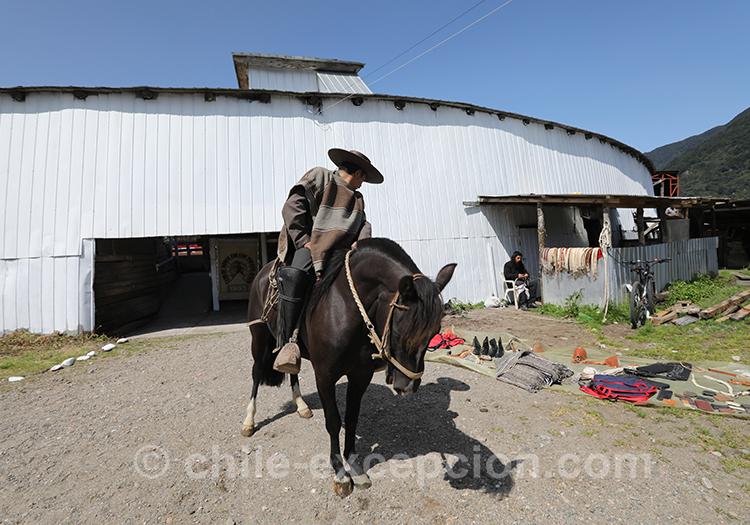 Un huaso et son cheval