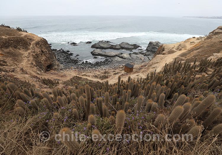 Comment se rendre à Punta de Lobos, Chili
