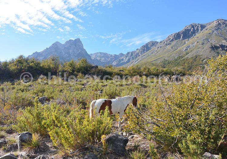 Parc Radal Siete Tazas, parc Inglés, deux parcs de la région centre du Chili