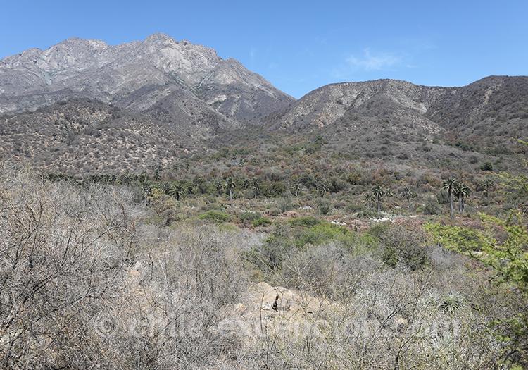 Que voir dans le parc national La Campana, Chili, Centre