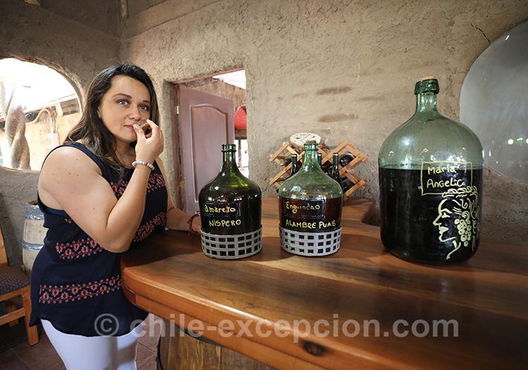 Dégustation de vin à Lolol, village du centre du Chili