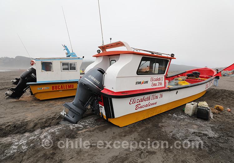 Côte Pacifique du Chili, Bucalemu