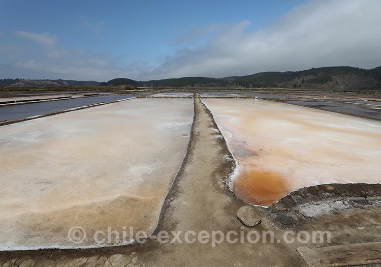 Découvrir les salines de Cahuil, Chili