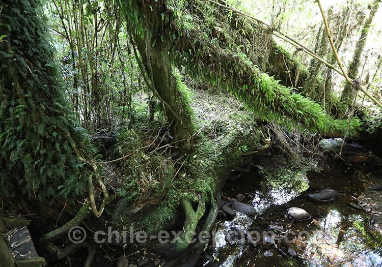 Se promener dans le parc Ayken, Chili