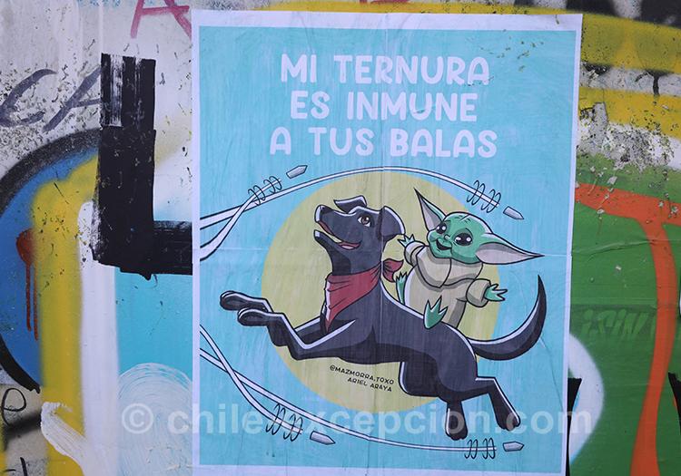 Protection des animaux au Chili