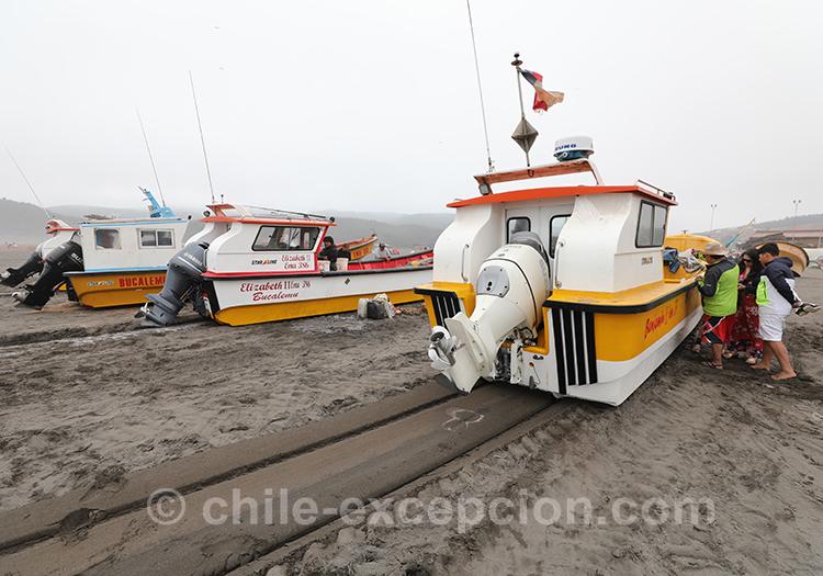 Se promener à Bucalemu, Chili