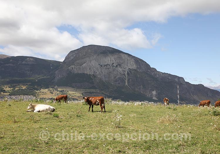 Elevage de Patagonie chilienne, Coyhaique