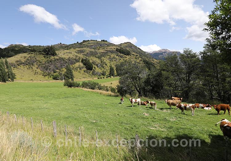 Les pâturages près de Coyhaique, Chili