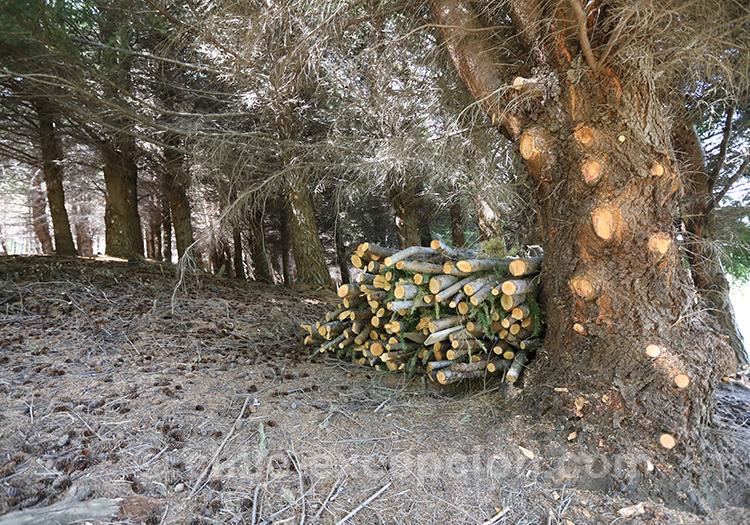 Branches coupées dans le parc national Coyhaique, Chili