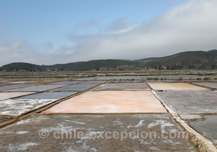 Comment visiter les salines de Cahuil, Chili