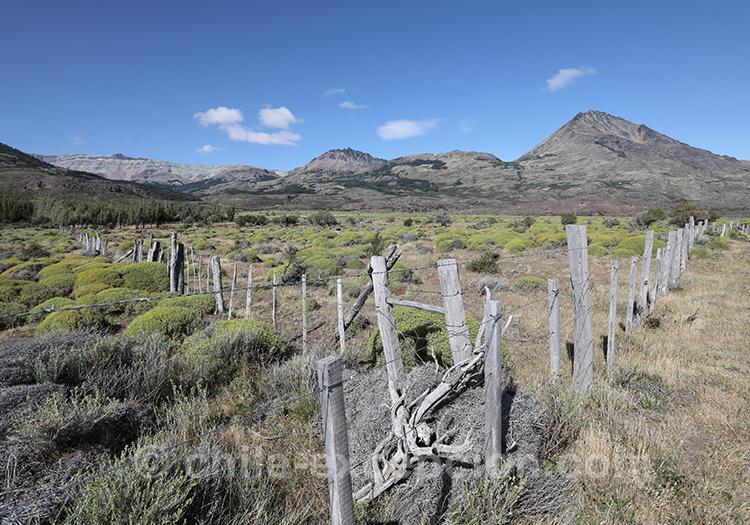 Champs magnifiques de Patagonie australe du Chili, entre Cerro Castillo et Puerto Ibañez