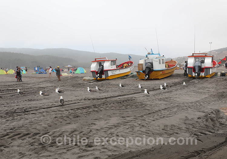 Pourquoi aller à Bucalemu, Chili