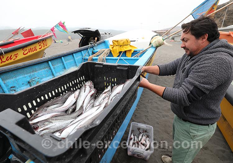 Cagette de poissons fraîchement pêchés, Bucalemu, Chili