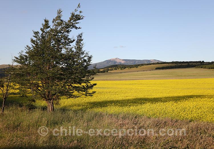 Partir au Chili et voir la région de Coyhaique