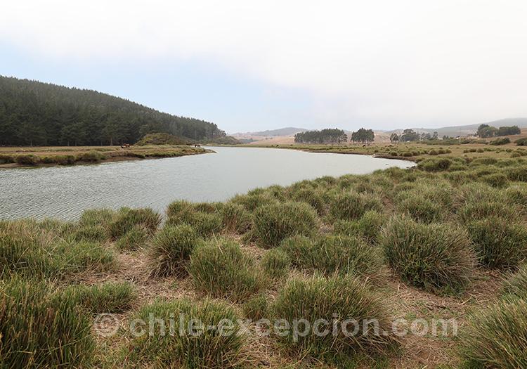 Paysages marins de Bucalemu au Chili