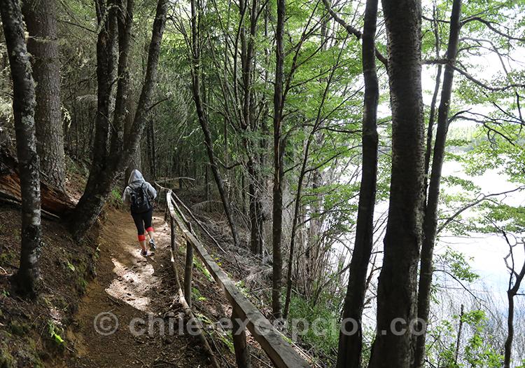Forêt du parc national de Coyhaique, Chili avec l'agence de voyage Chile Excepción