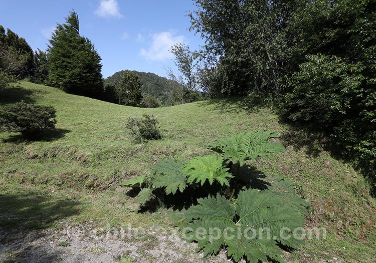 Où visiter le Parc Ayken, Chili