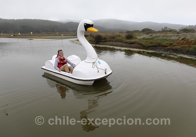 Faire du pedalo à Bucalemu, Chili