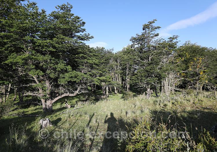 Végétation de la région de Coyhaique au Chili