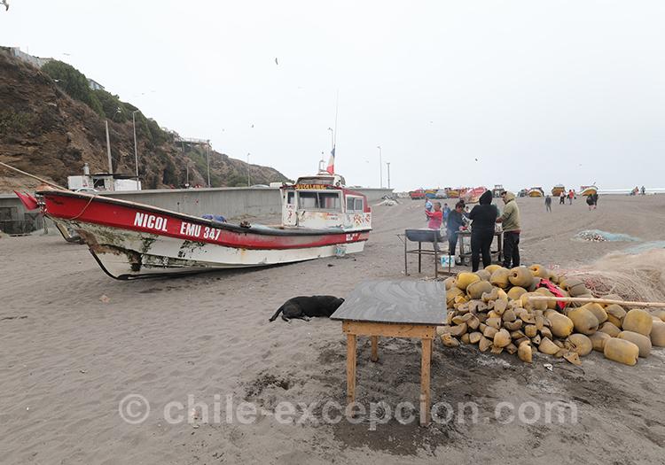 Haut lieu de pêche au Chili, Bucalemu