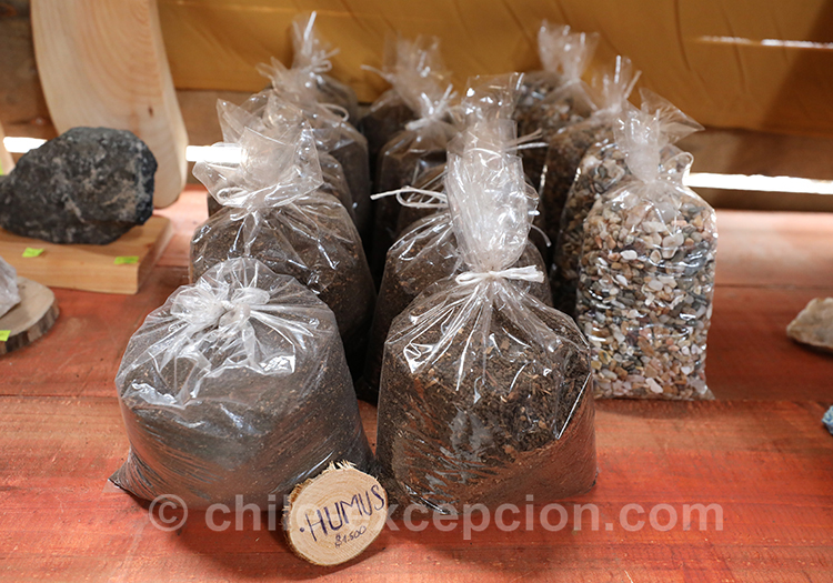 Sel noir, Cahuil, Chili