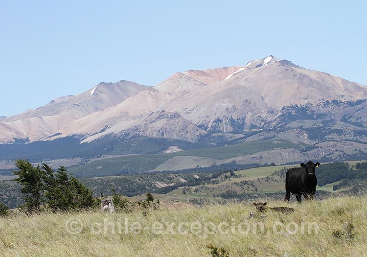Elevage de la patagonie australe du Chili