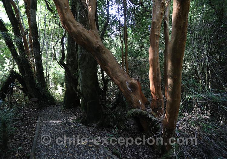 Comment aller au parc Ayken au Chili dans la Patagonie australe