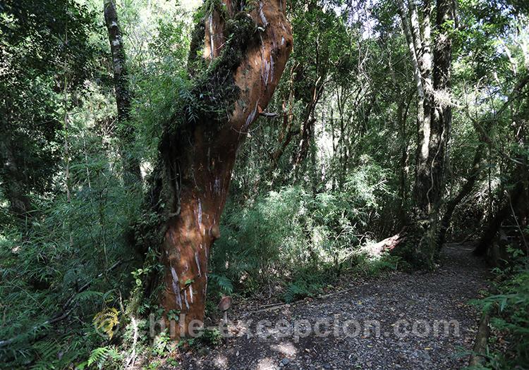 Pourquoi visiter le parc Ayken en Patagonie australe du Chili