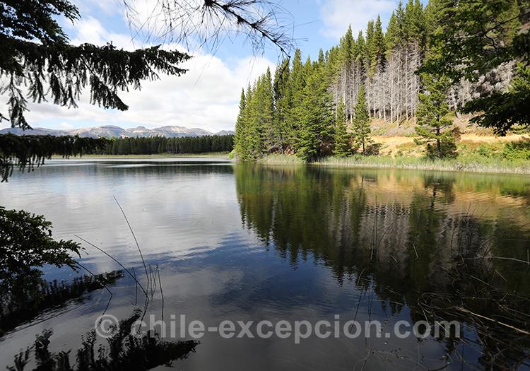 Végétation au bord du lac dans le parc national Coyhaique, Chili