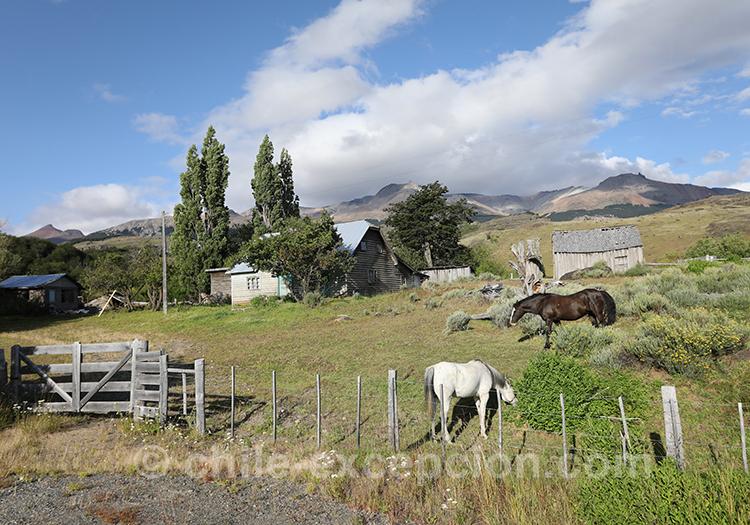 Elevage de chevaux en Patagonie australe du Chili