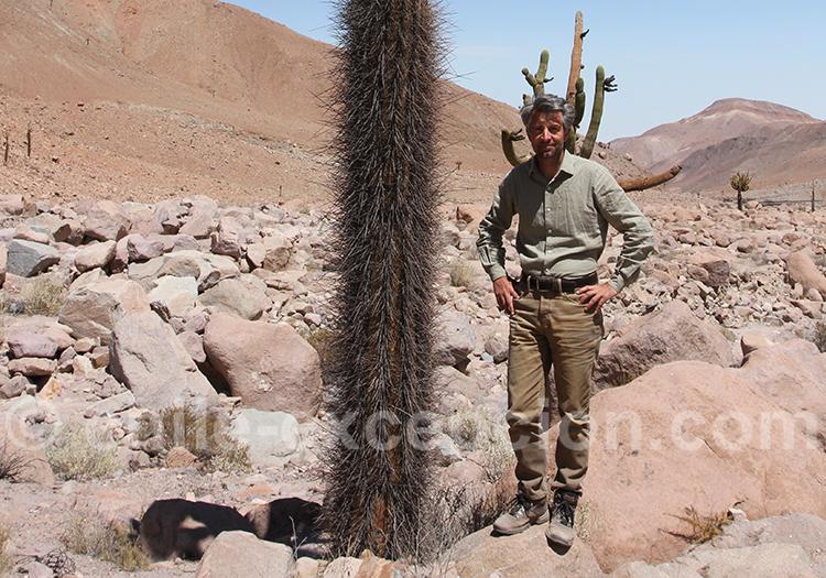 Taille du cactus candélabre 3 à 5 mètres