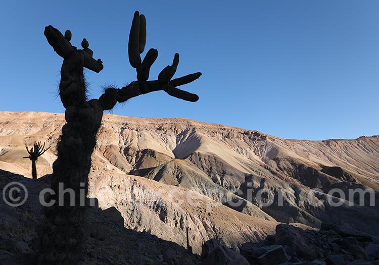 Fantômes du désert d'Atacama