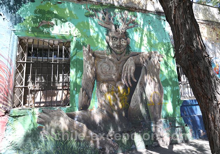 Tête d'arbre dans les rues de Yungay, Santiago