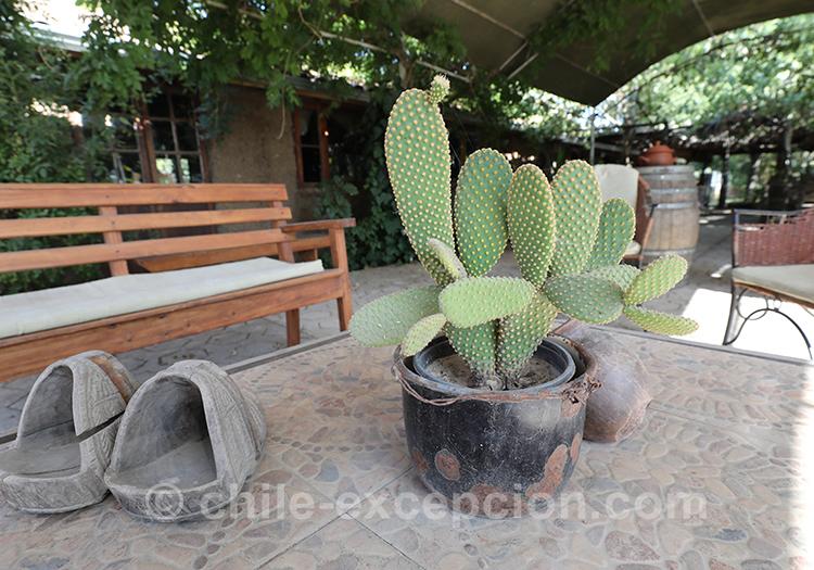 Cactus du la maison d'hôte Caliboro, Chili